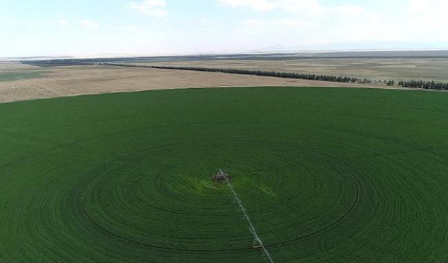 Hazine arazileri çiftçilere kiralanacak!