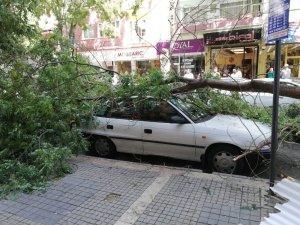 Malatya'da şiddetli fırtına ağaçları devirdi