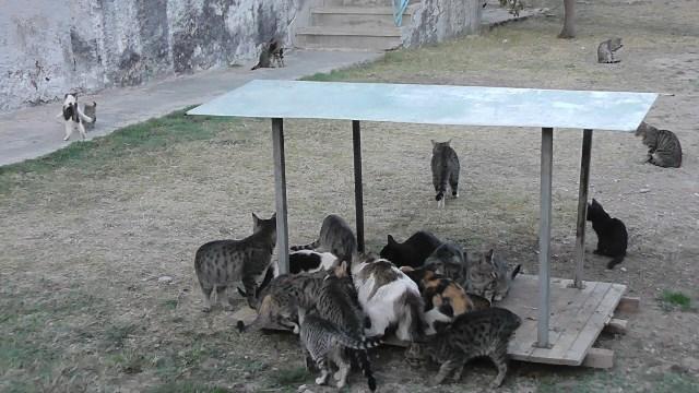 3 yılda 29 sokak kedisini sahiplenerek bakımını üstlendi