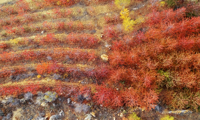 Toros Dağları'nda sonbahar