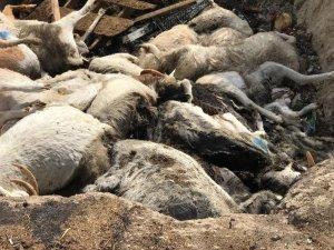 150 keçinin telef olduğu çiftliğin sahibi FETÖ firarisi iş adamı çıktı