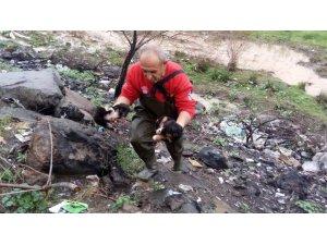Mahsur kalan yavru köpekleri itfaiye ekipleri kurtardı