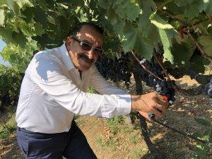 Türk kiraz ve üzüm ihracatçılarının son rotası Güney Afrika