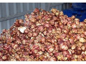 Beypazarı'nda yer elması üretimi