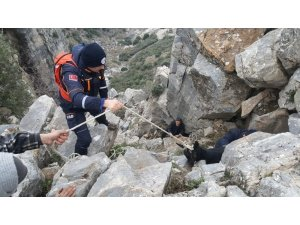 600 metrede keçi kurtarma operasyonu