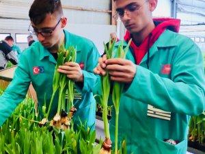 Çumra Çatalhöyük Mesleki ve Teknik Anadolu Lisesi öğrencileri Hollanda'da staj yaptı