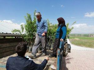 Çiftçilere ceviz ve badem fidanı dağıtıldı