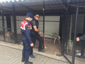 Barınaktan pitbull cinsi 2 köpeği çalan 3 şüpheli yakalandı