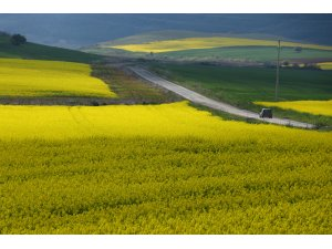"""Trakya'da """"sarı bahar"""""""