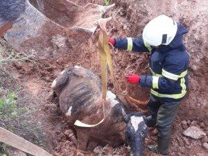 Bataklığa saplanan ineğe kurtarma operasyonu