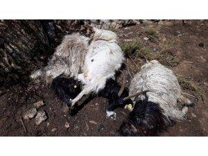 Hakkari'de yıldırım düştü: 13 hayvan telef oldu
