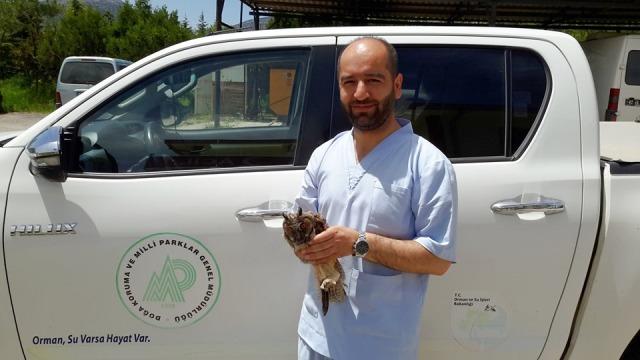 Yaralı bulunan puhu kuşu tedavi altına alındı