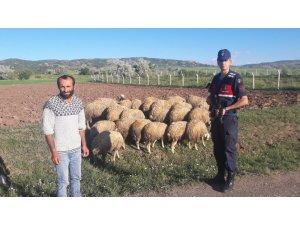 Kayıp olan koyunları Jandarma buldu