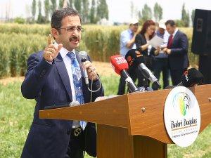 """Bakan Yardımcısı Aksu'dan Konya'da """"dolu zararı"""" açıklaması: Devletimiz, çiftçimizin yanında"""