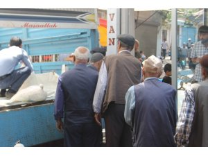 Koyun peynirine talep arttı, vatandaşlar günlerce sipariş için bekliyor
