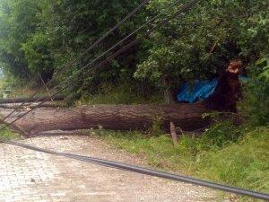 Daday'da şiddetli yağmur ağaçları devirdi