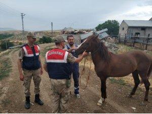 At hırsızı yakalandı