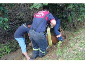 Kanala düşen ineği itfaiye kurtardı