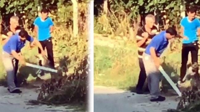 Yavru köpeği sopayla dövdü 3 bin 897 TL ceza ile kurtuldu
