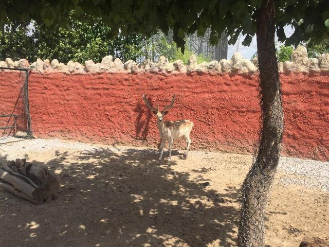Konya'ya Yaban hayvan kurtarma merkezi kuruluyor