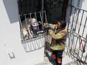 Pencere parmaklıklarına sıkışan köpek, güneşin altında 2 gün boyunca aç susuz kaldı