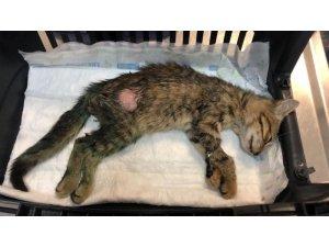 Kediyi önce saçmayla vurdular, sonra işkence ettiler