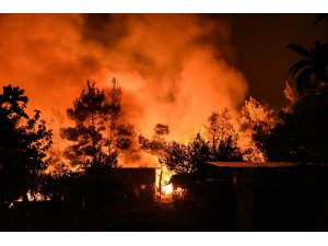 Yunanistan'daki orman yangını devam ediyor: 8 yaralı