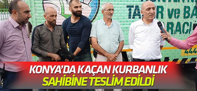 Konya'da kaçan kurbanlığı ekipler buldu