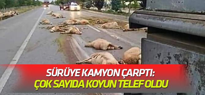 Sürüye kamyon çarptı: Çok sayıda koyun telef oldu