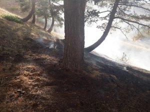 Orman yangını 3 saat sonunda söndürüldü