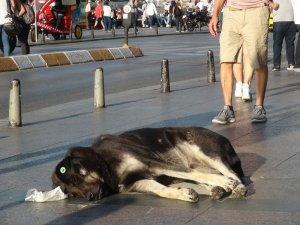 Taksim'de turist kadın sevdiği köpek tarafından ısırıldı