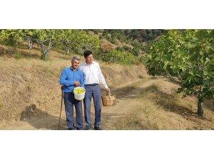 Başkan Özcan üreticiyle birlikte incir hasat etti