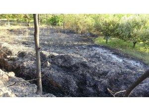 Otların temizlenmesi için yakılan ateş ceviz ve elma ağaçlarına zarar verdi