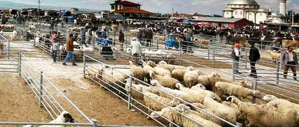 """Ilgın'da hayvan pazarında """"veba"""" karantinası"""