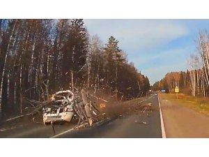 Rusya'da devrilen ağaç otomobili parçaladı