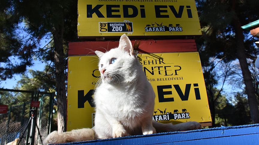 Seçim sandıkları kedilere sıcak yuva oldu