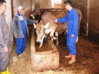 Türkiye aşı geliştirdi, Ermenistan istedi