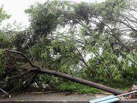 Çin'de hortum ve fırtına: 51 ölü