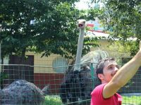İtfaiye bahçesinde deve kuşu besliyor