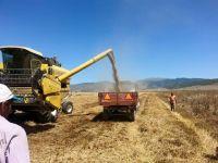 Buğday üretiminde Konya lider
