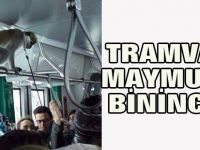 Maymun ile tramvaya binince...