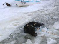 Göle düşen inek, kurtarıldı
