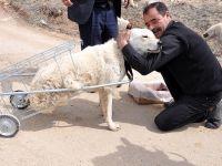 Yürüyemeyen köpeğe pazar arabasından yürüteç VİDEO HABER
