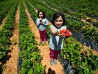 Büyükşehir'den çiftçiye fidan ve fide desteği