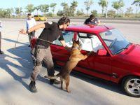 Narkotik Köpeği 'Oscar' Bayram Mesaisinde