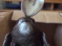 Şarkışla'da ebabil kuşu bulundu TIKLA&İZLE