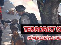 İsrail terörü sürüyor: Sokaklarda köpekleriyle saldırdılar