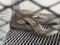 Otomobile giren yılan korkuttu