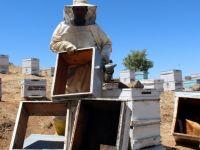 Pes dedirten hırsızlık, arı kovanlarından balları çaldılar