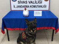 Sivas'ta uyuşturucu operasyonu !